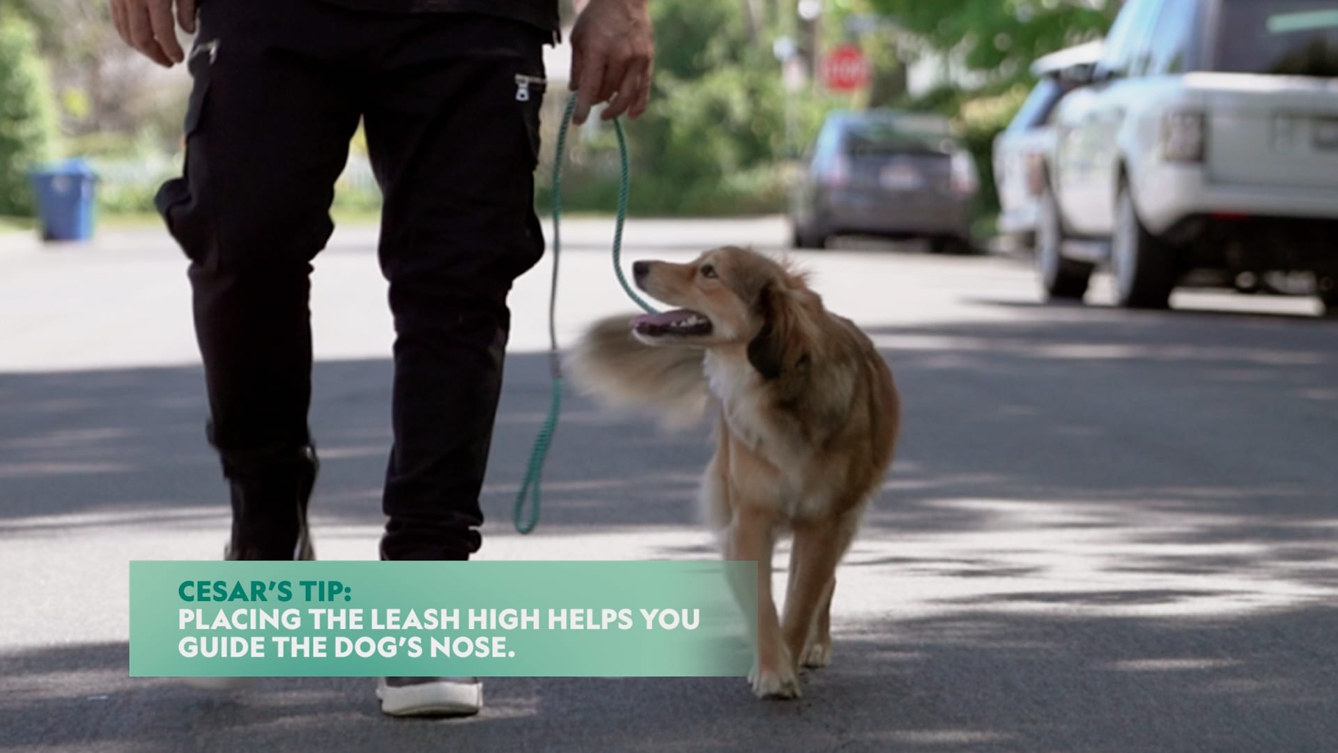 How to Put a Leash on Your Dog