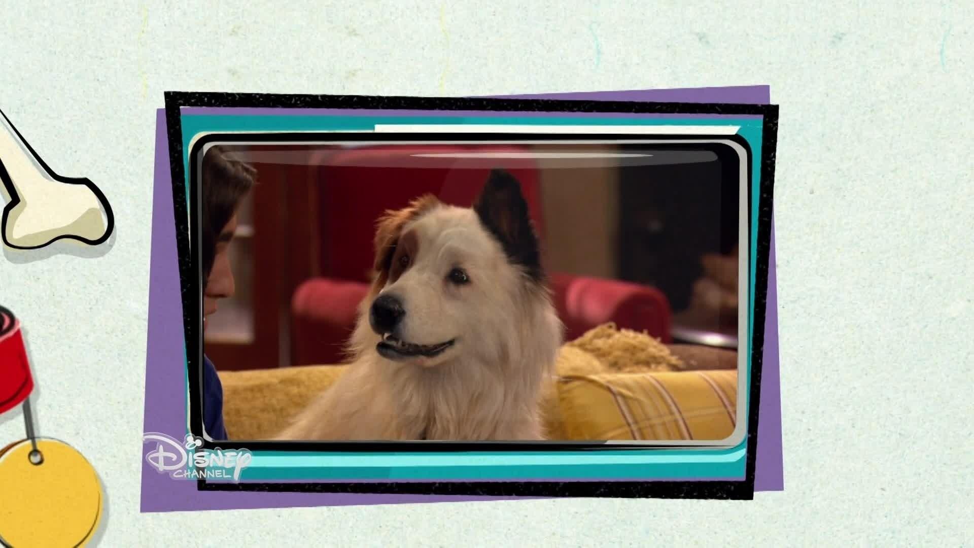 Joue-la comme Donald avec #doggy Blog