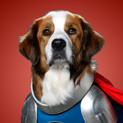Captain Canine