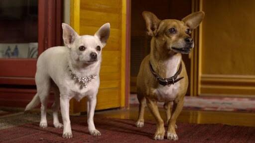 Beverly Hills Chihuahua 2 Trailer