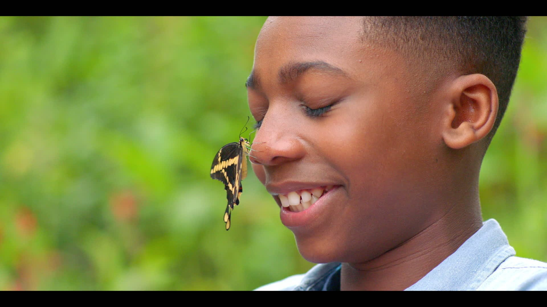 Butterflies - Wildlife Heroes