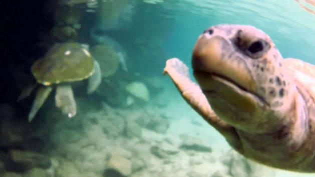Tartarugas - Deixe a sua marca