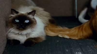 Homeward Bound 2: Lost in San Francisco Trailer