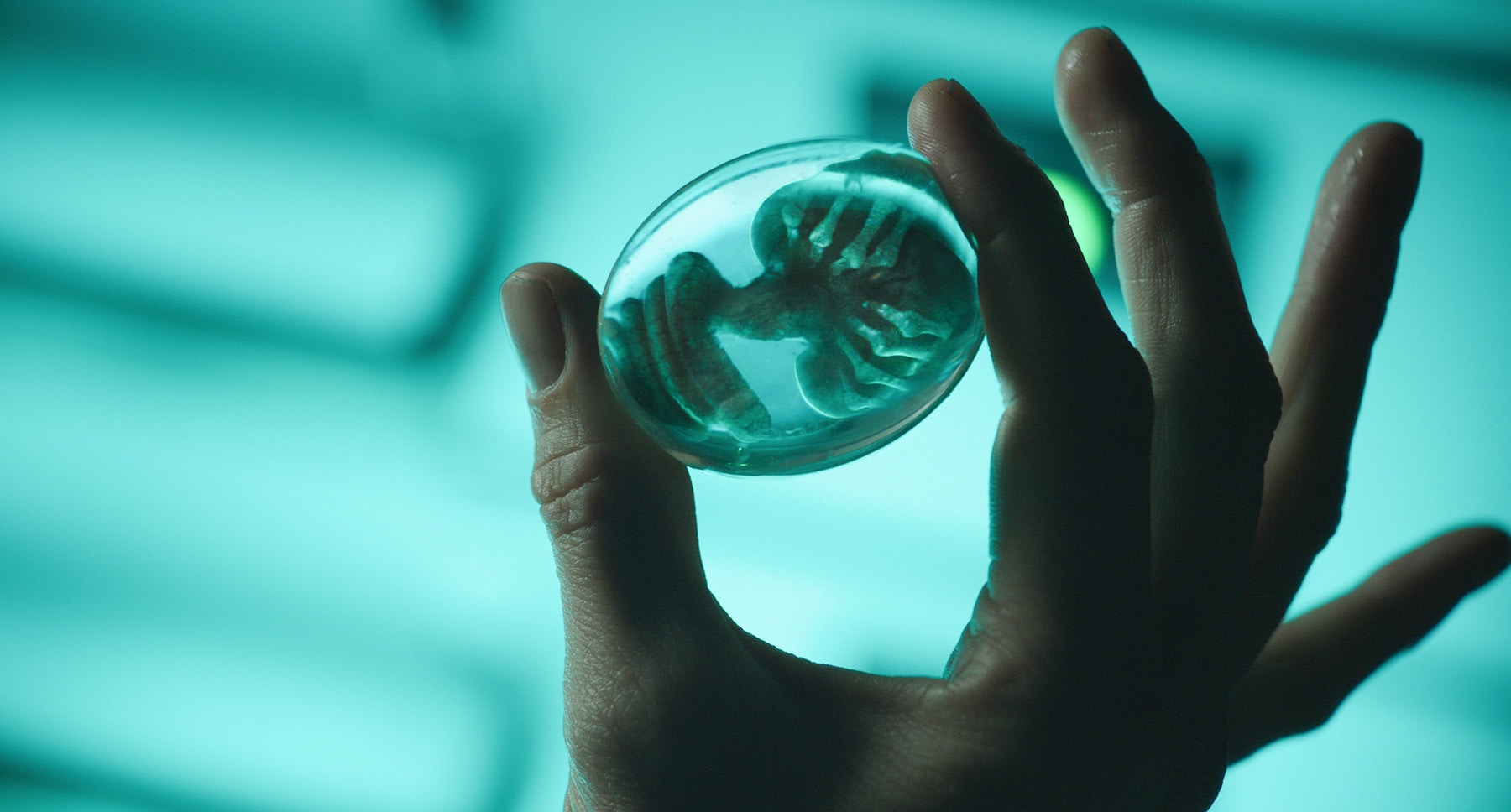 "Hand holding an alien embryo in the movie ""Alien: Covenant"""