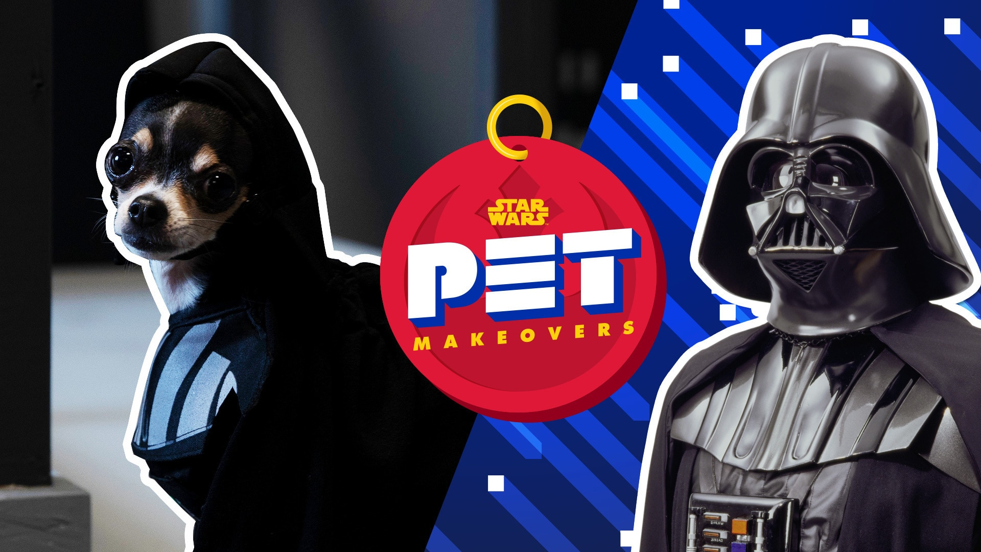 Turning a Chihuahua Into Darth Vader   Star Wars Pet Makeovers by Oh My Disney