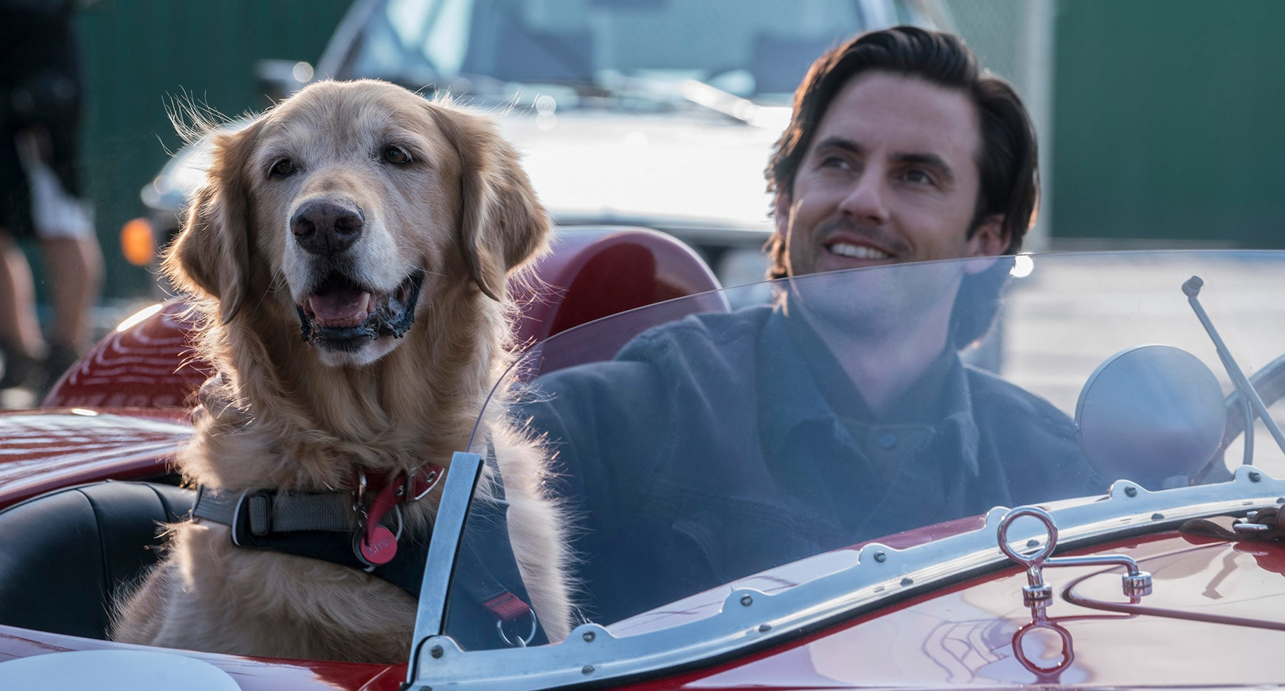 "Denny (Milo Ventimiglia) and dog Enzo sitting in a car in the movie ""The Art of Racing in the Rain"""