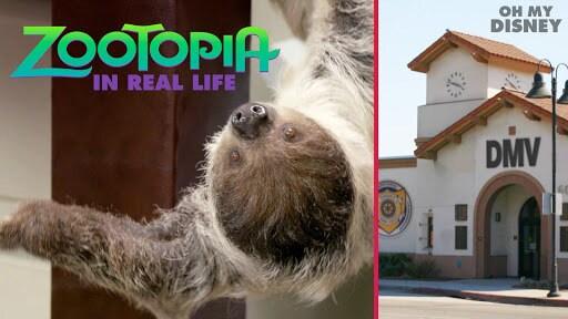 Zootopia IRL | Oh My Disney