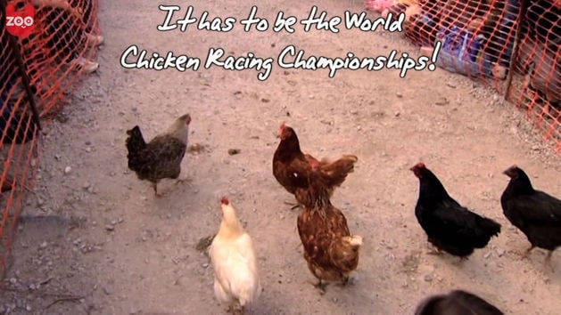 Chicken Racing World Championships