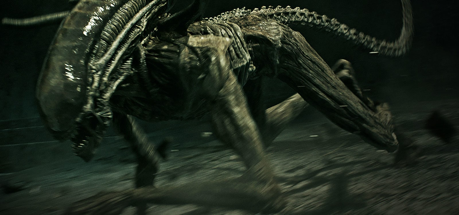 "Adult Alien charging forward in the movie ""Alien: Covenant"""