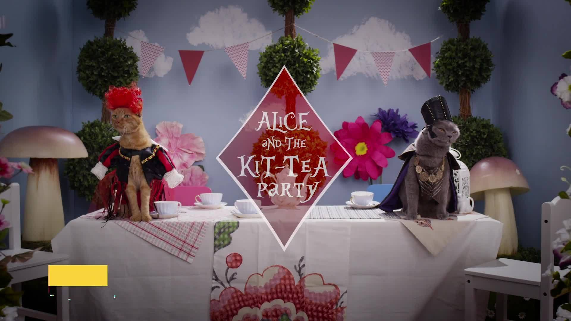 Cute Cats and Kittens in Alice Costumes and Wigs