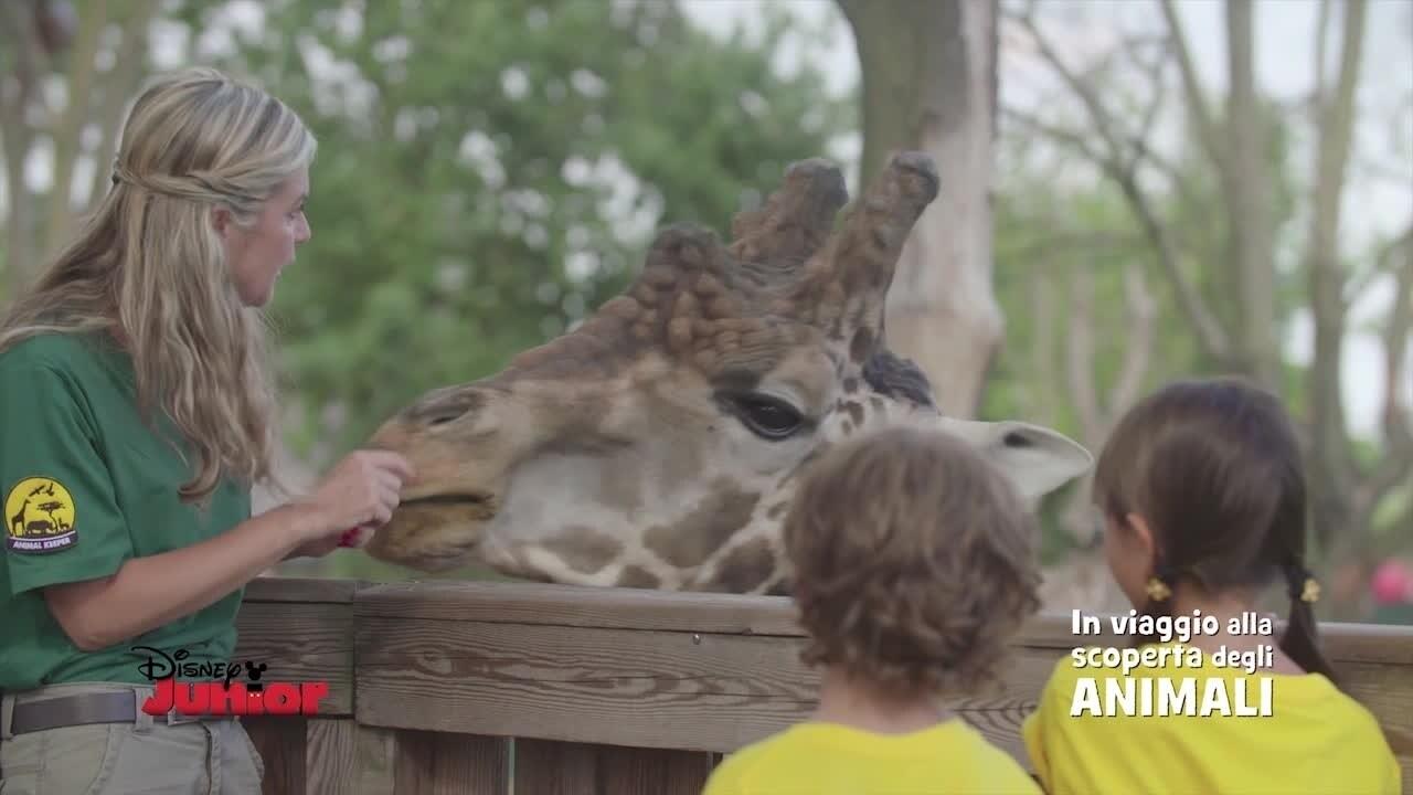 In viaggio alla scoperta degli animali - Le Giraffe