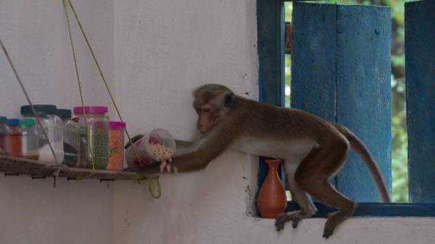 The Cutest Disney Monkey Moments