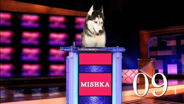 Million Dollar Mishka!