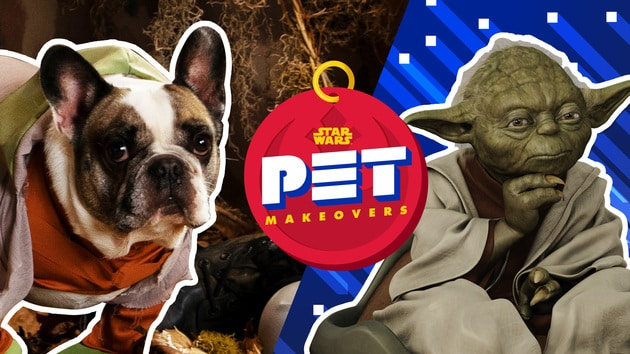 Yoda and Luke Skywalker | Star Wars Pet Makeovers by Oh My Disney