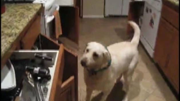 Dog Closes Cabinet Doors