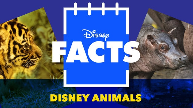 Meet the Animals from Disney's Animal Kingdom | Disney Facts by Disney