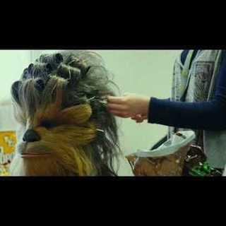 Star Wars: Die letzten Jedi - Behind the Scenes