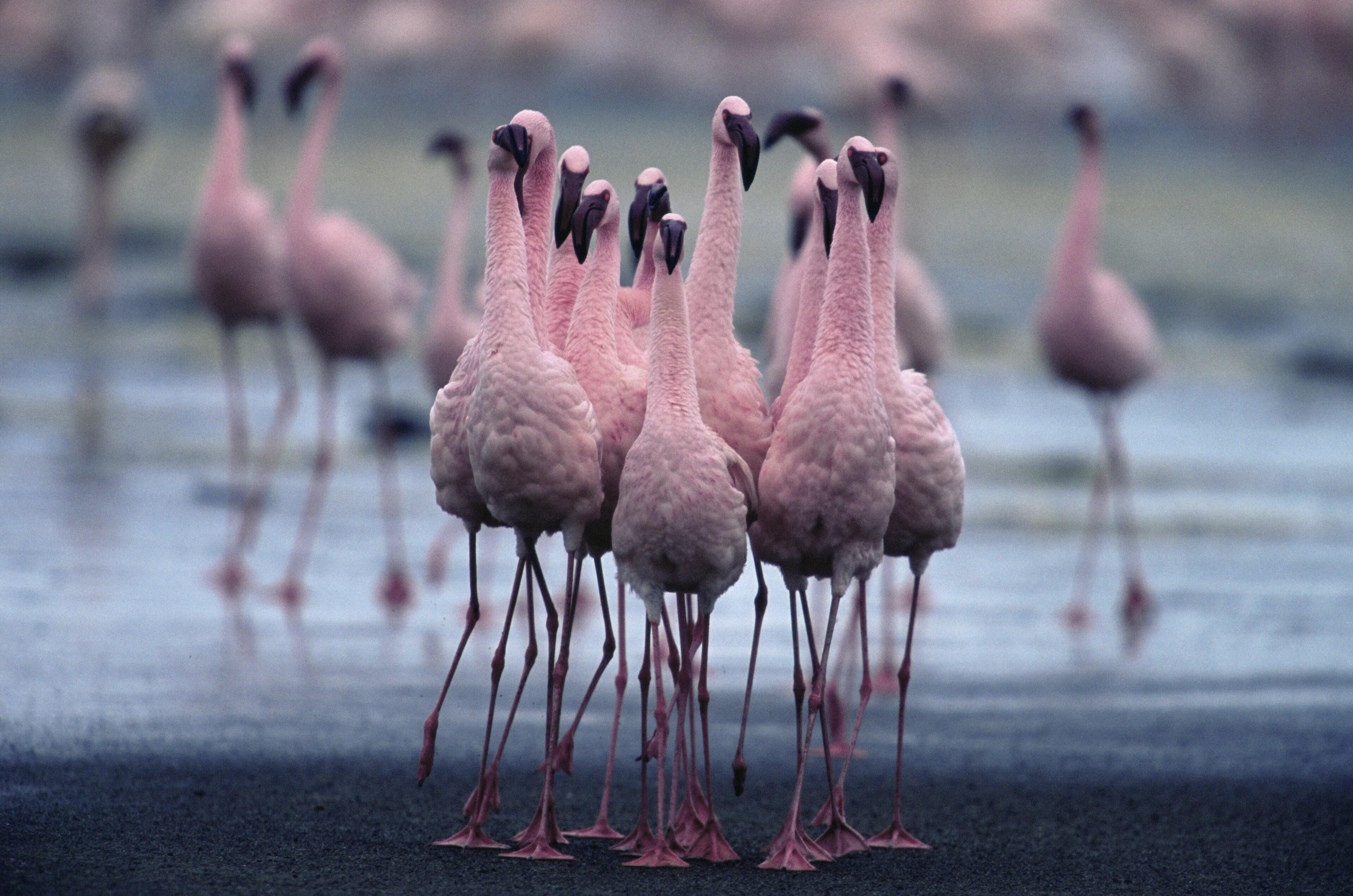 A close group of birds survey the scene.