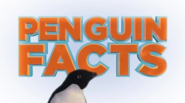 Disneynature Penguins | Penguin Facts