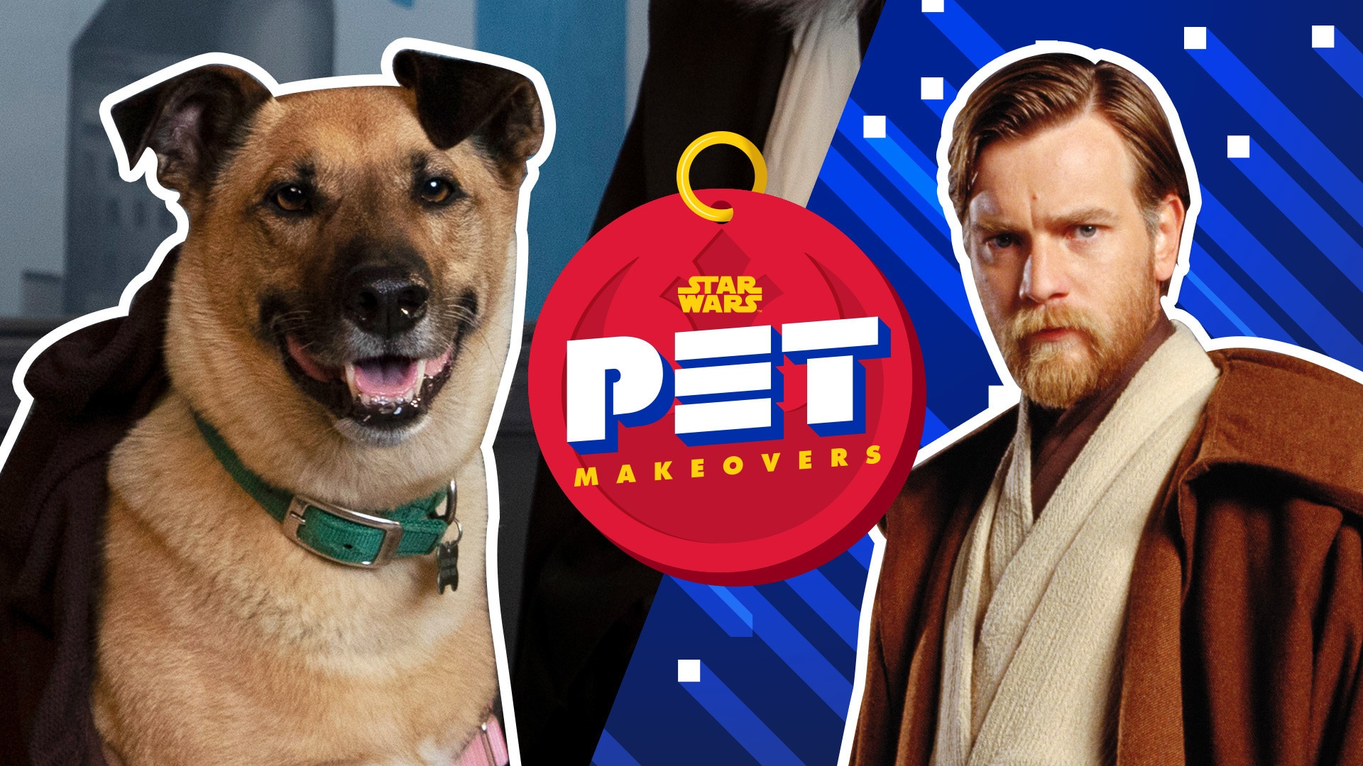 The Jedi Council | Star Wars Pet Makeovers by Oh My Disney