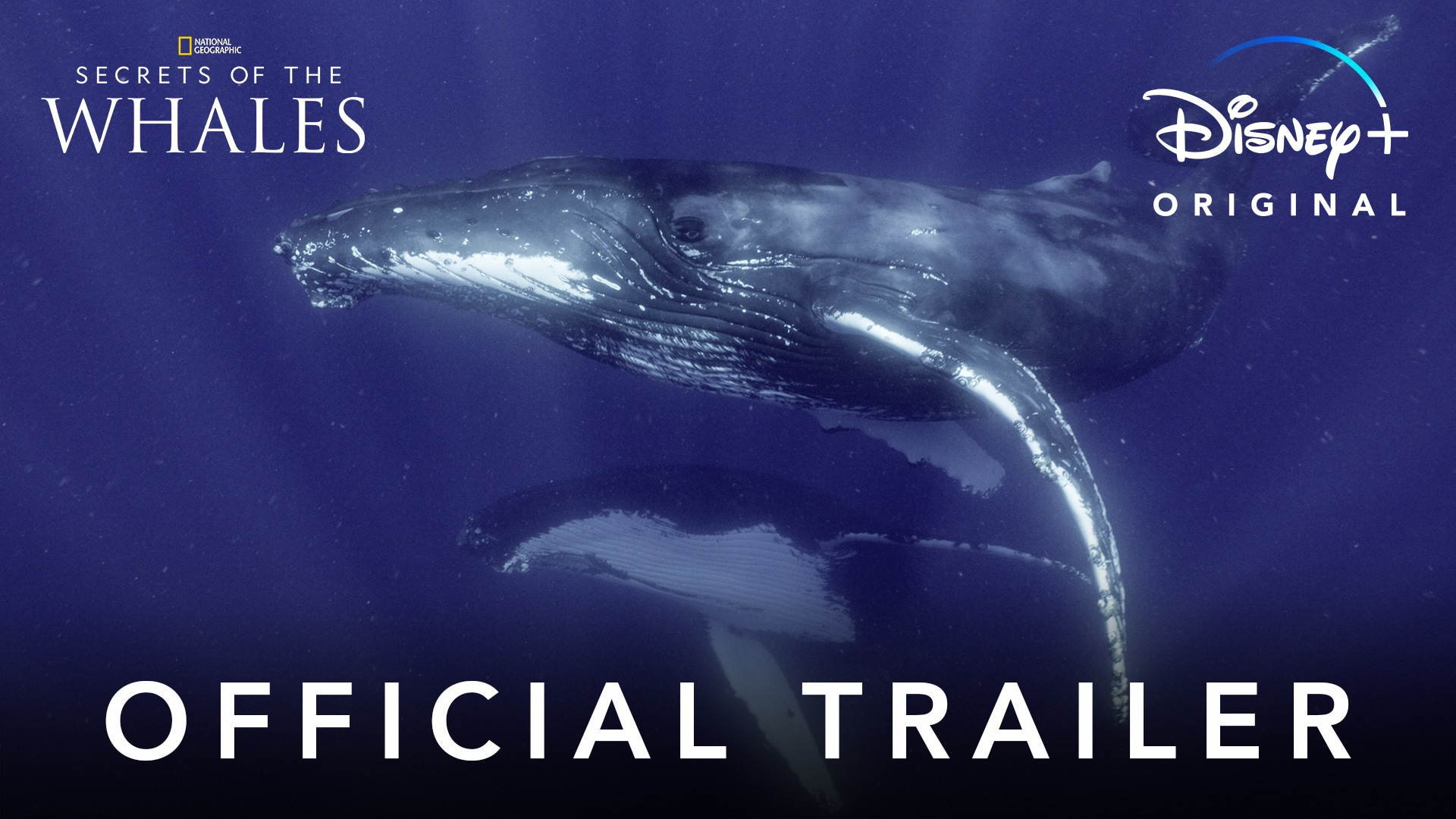 Secrets of the Whales | Official Trailer | Disney+