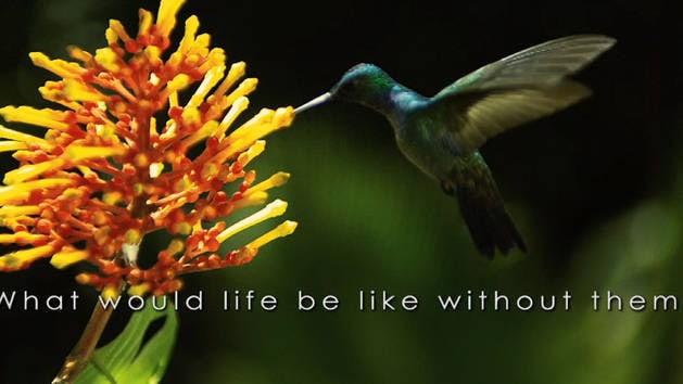Wings of Life Trailer