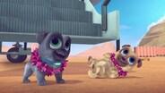 Hawaii Pug-Oh/A.R.F.