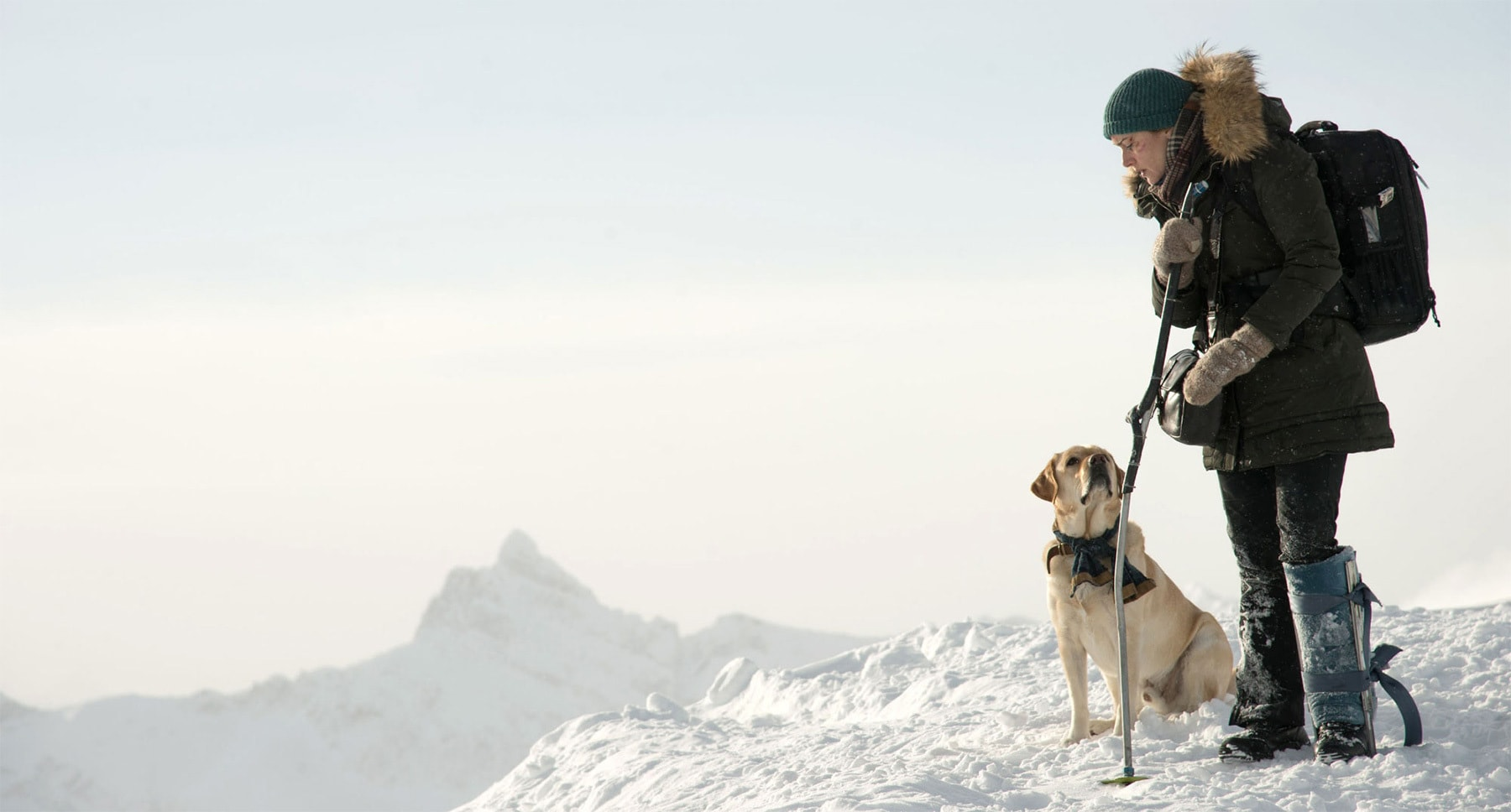"Kate Winslet (as Alex Martin) with a dog on a snowy mountain in the movie ""The Mountain Between Us"""