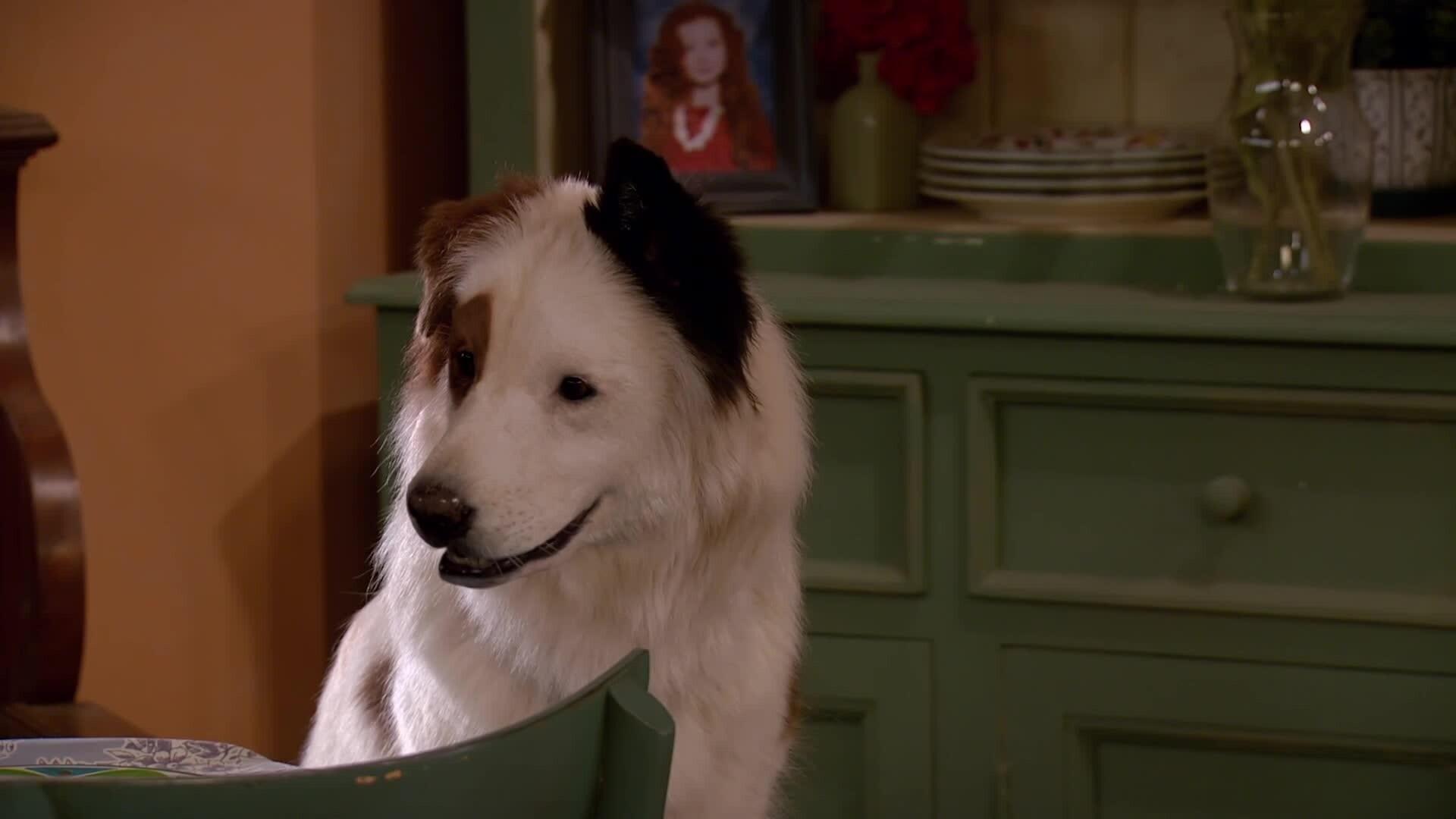 Hund mit Blog - Die Talentshow