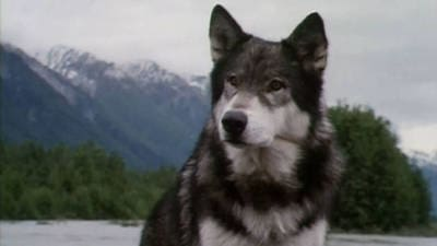 White Fang Trailer
