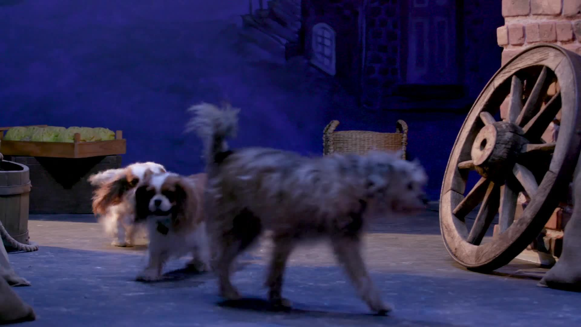 Livestream of Lady and the Tramp Puppies | Oh My Disney