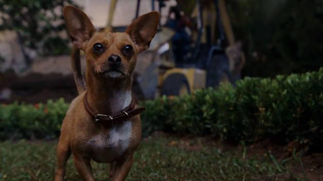 Featurette: Voicing Dogs
