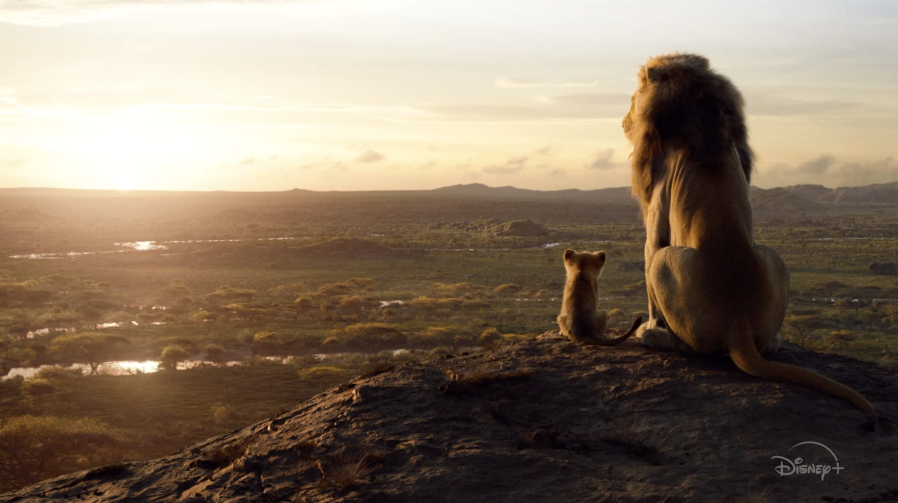 The Lion King | Now Streaming | Disney+