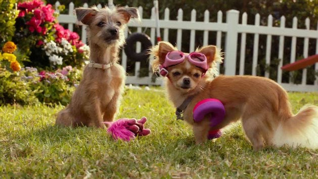 Beverly Hills Chihuahua 3: Rosa's Swimmies