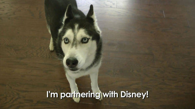 Pets and Animals Videos | Disney Video