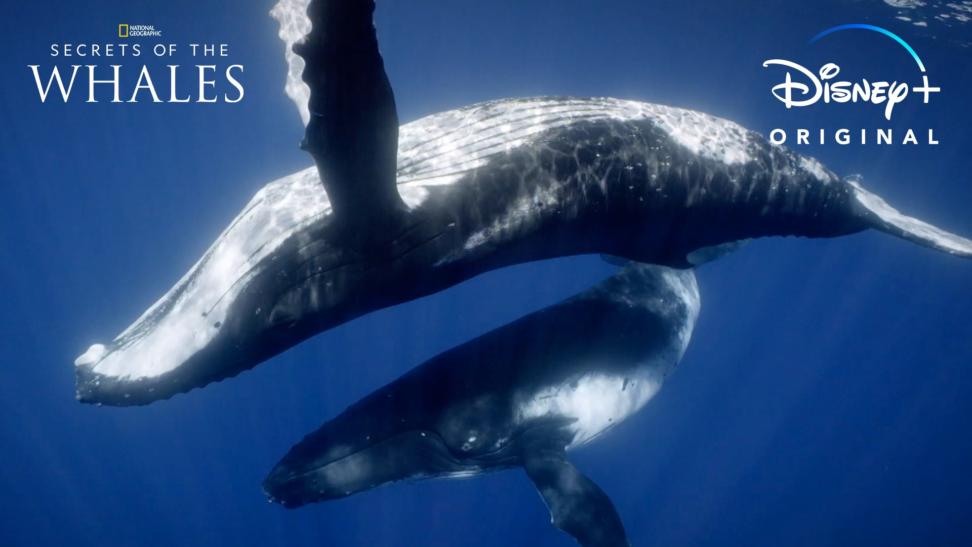 Dive In | Secrets of the Whales | Disney+