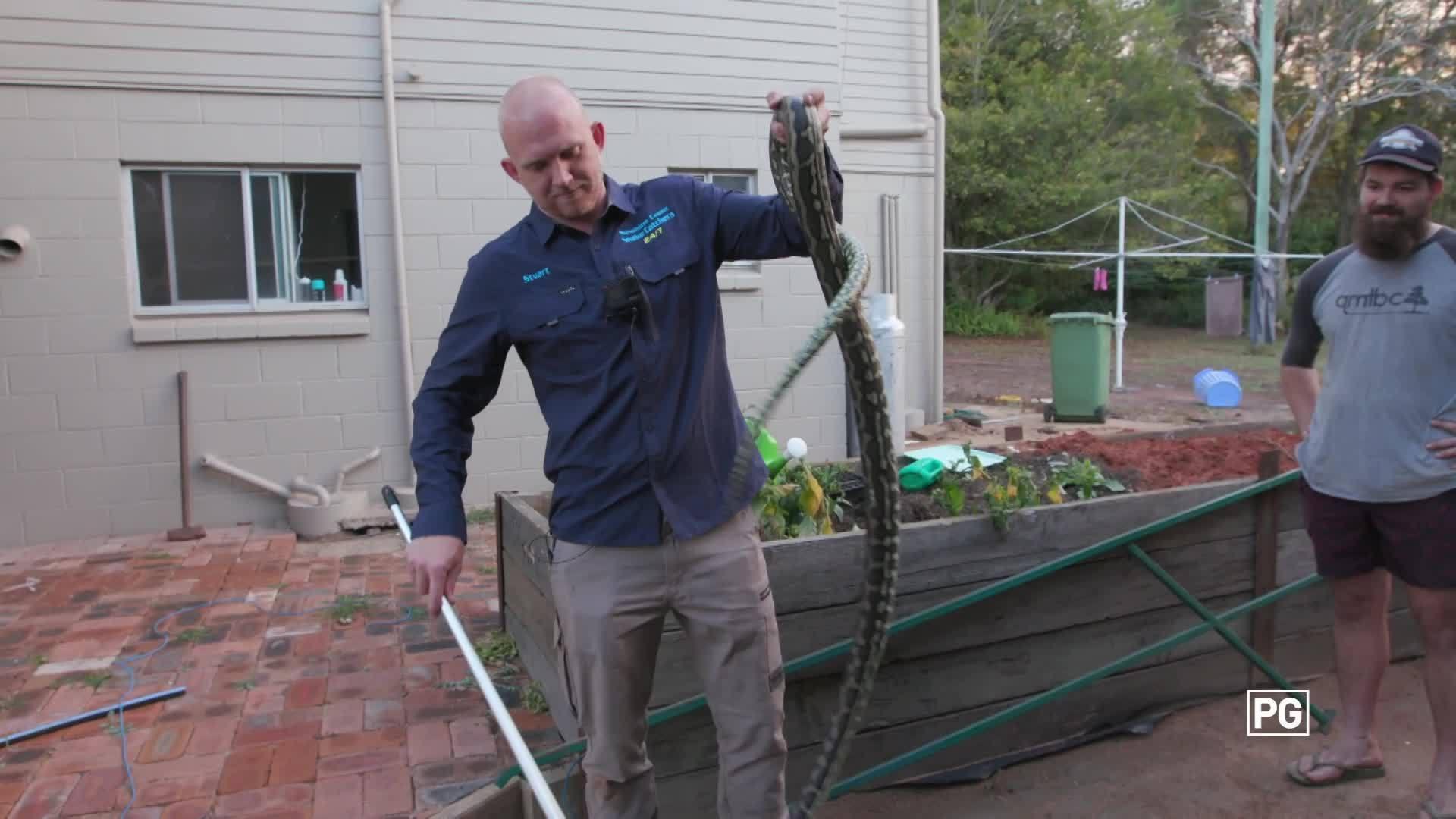 Meet Stu | Aussie Snake Wranglers | National Geographic Australia & New Zealand