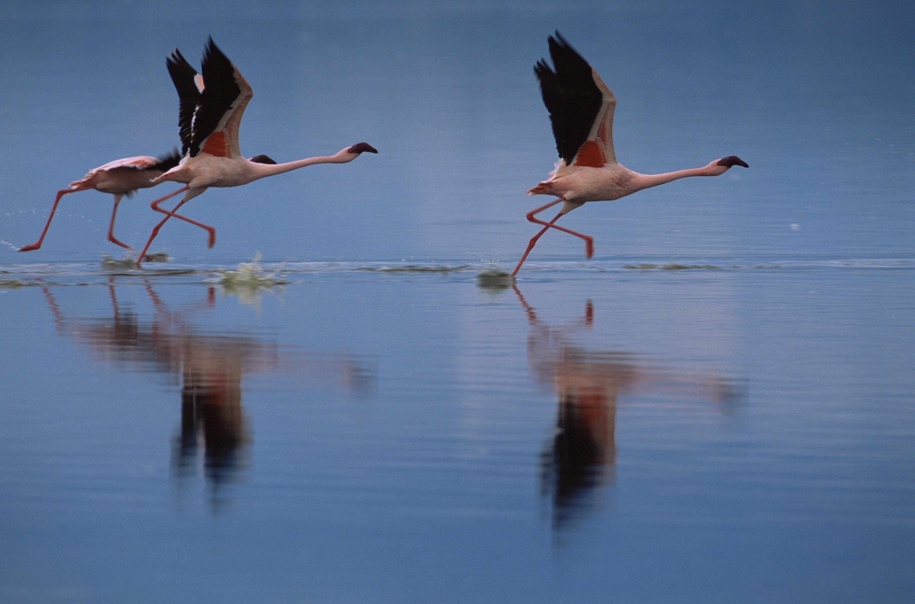 Gliding on top of the water.