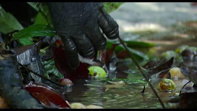 Chimpanzés - Extrait : Déjeuner au bord de l'eau
