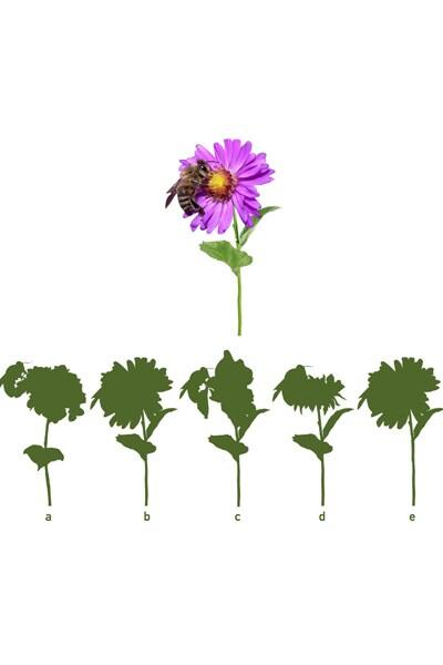 Le jeu des ombres Pollen