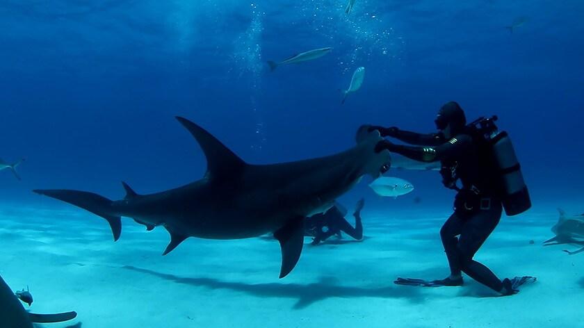 Sharkfest Image