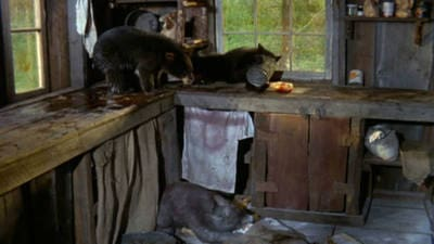 The Bears and I Trailer