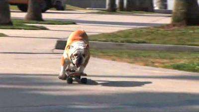 Skateboarding Dog 1