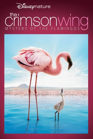 The Crimson Wing: Mystery of the Flamingos