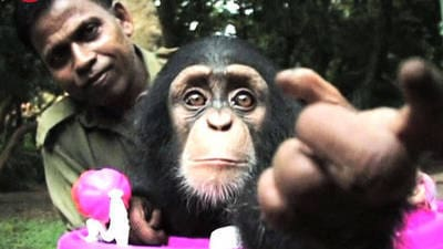 Man Adopts Baby Chimpanzee
