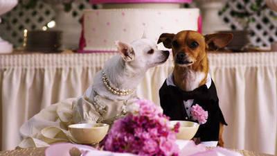 Papi & Chloe Get Married