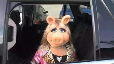 Miss Piggy @ the Drive Thru