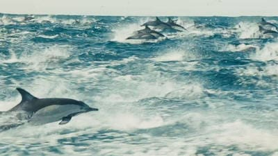 Large Herds - Disneynature: Oceans