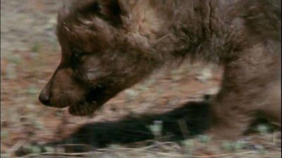 The Legend of Lobo Trailer