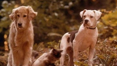 Homeward Bound: The Incredible Journey Trailer